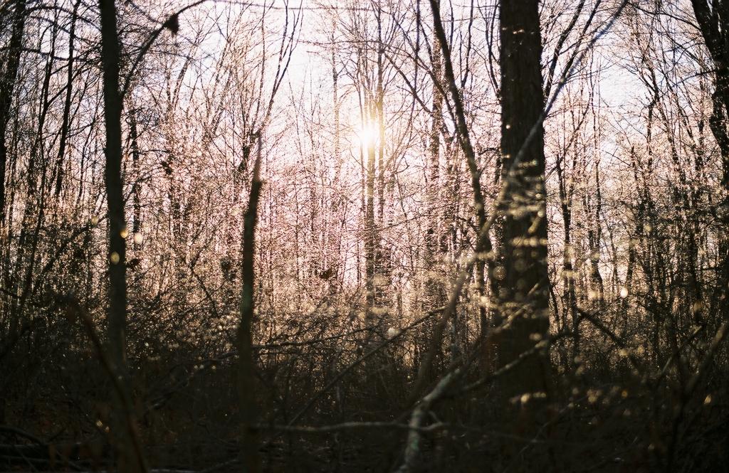 november wood, my back yard